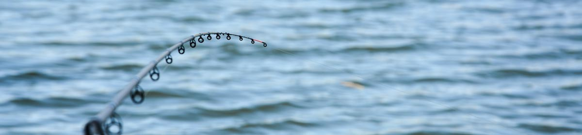 Pêche Feeder Compétition